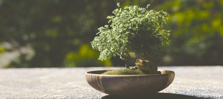Бонсай в садоводстве