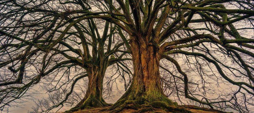 Будь как дерево