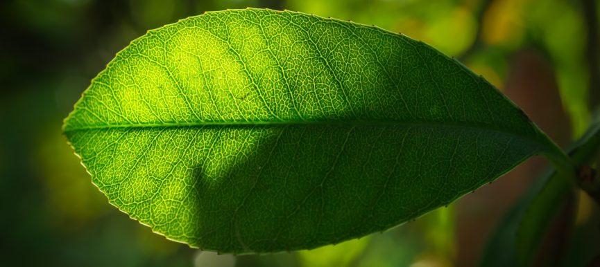 10 правил покупки саженцев плодовых деревьев