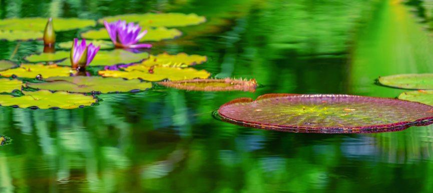 Клумбы из водных растений в Сочи