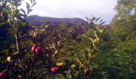 Сады на склонах Сочи
