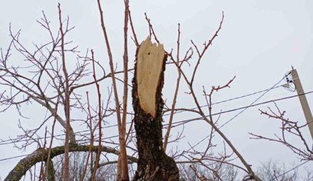 Снегопад в Сочи. Как помочь деревьям?
